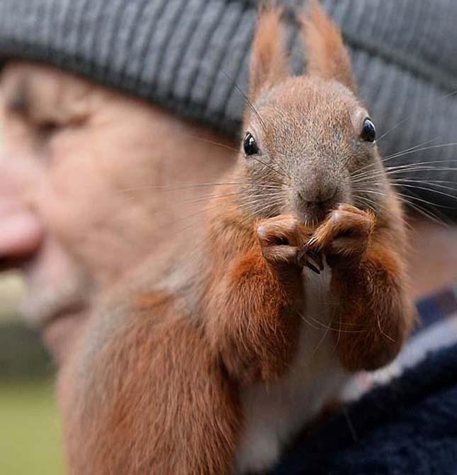 A megmentett mókus és a bácsi barátsága