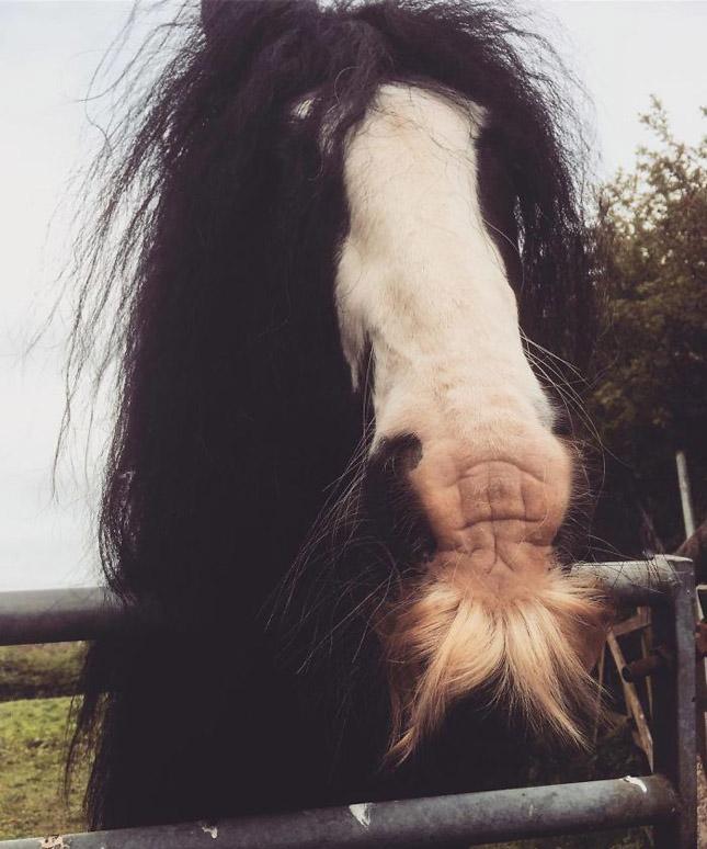 Bajszos lovak
