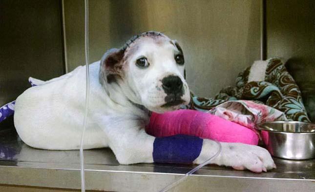 Sorstársa vigasztalta a bántalmazott kiskutyát