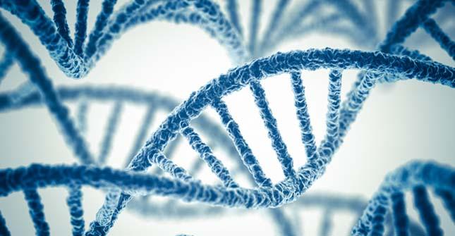 Genetikai tényező is hozzájárulhat egy nemzet boldogságához