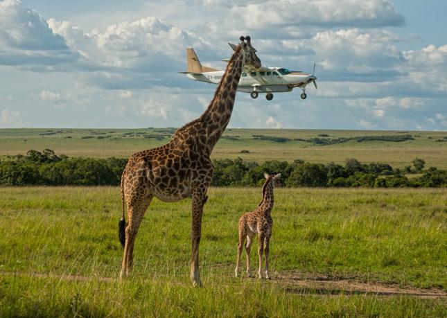 Comedy Wildlife Photography 2017