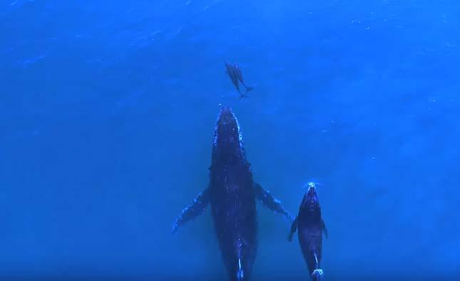 Delfinek és bálnák találkozása