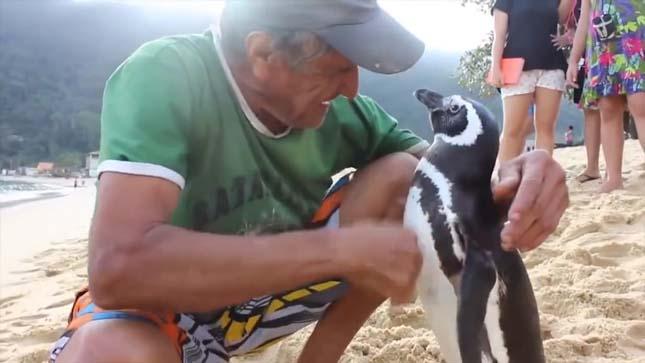 Minden évben visszatér megmentőjéhez a pingvin