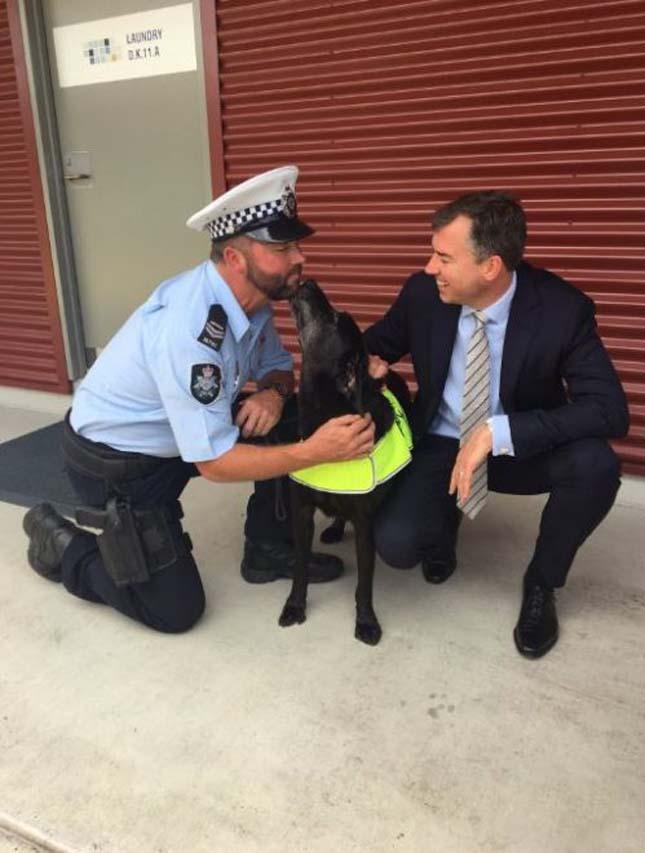 Ausztrália legjobb drogkereső kutyája