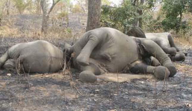 Elefántvadászat
