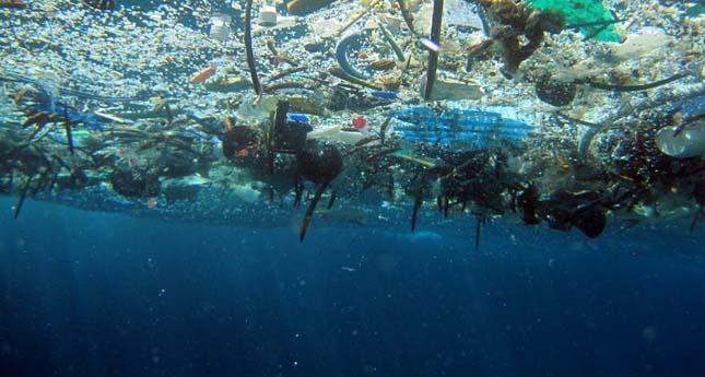 A fiatal halak rászoknak a műanyagrészecskékre