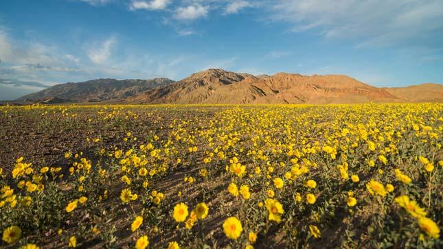 Halál-völgye