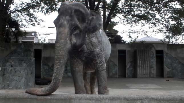 Japán legöregebb elefántja