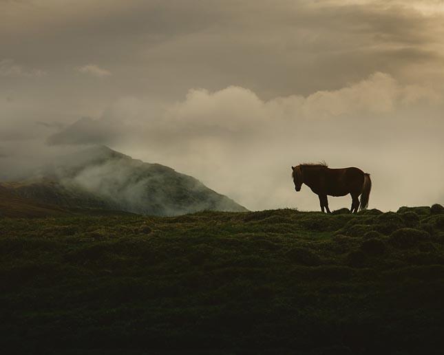 Izlandi lovak