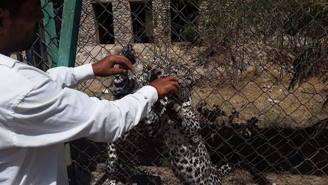 Jemeni állatkert