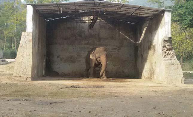 Kaavan elefánt