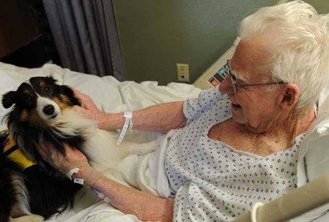 Beengedik egy kanadai kórházban a betegekhez a kedvenceiket