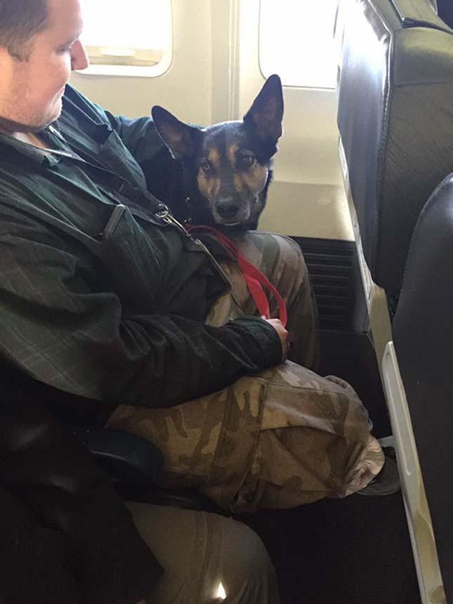 Háziállatok a repülőn