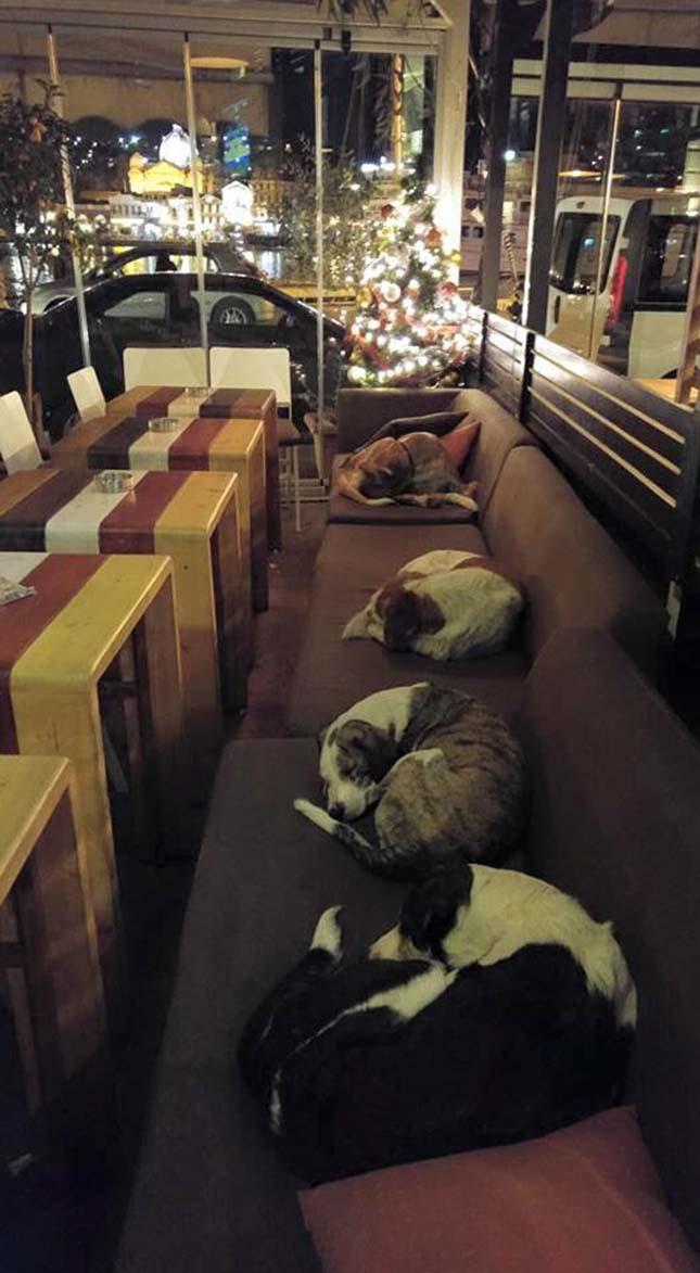 Kávézóban alszanak a kóbor kutyák