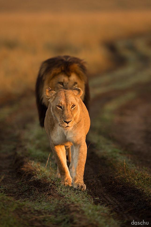 Kenyai vadvilág