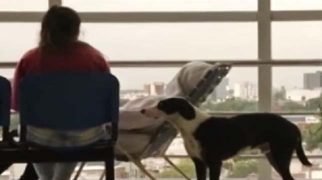 A kórházban vár gazdájára a hűséges kutya