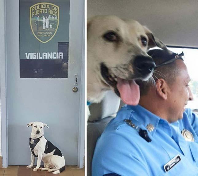 Rendőrök fogadták be a kóbor kutyát