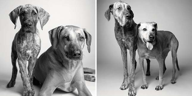 Kutyák fiatalon és öregen
