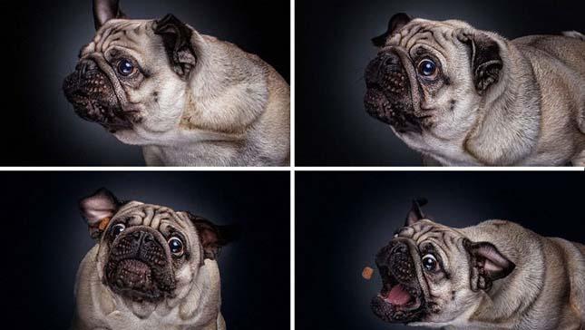 Kutyák és a jutalomfalat