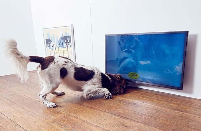 Kutyáknak szóló kiállítás