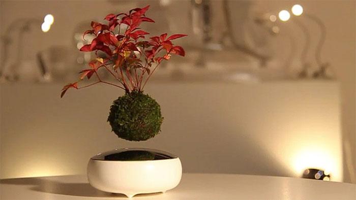 Lebegő bonsai
