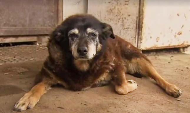 A világ legöregebb kutyája