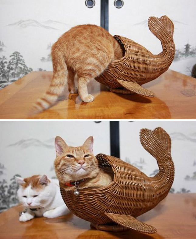 Macskák és a dobozok