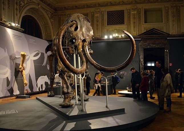 Kiderült, miért halhattak ki a gyapjas mamutok
