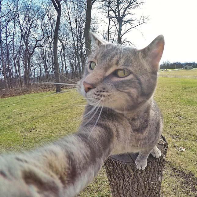Manny a szelfiző macska