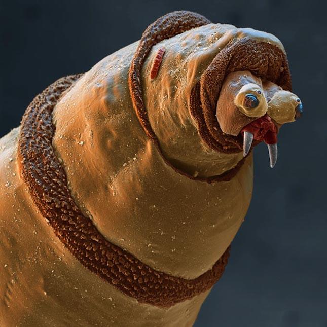 Mikroszkopikus világunk