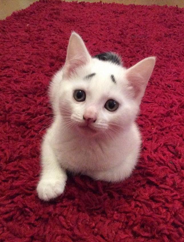 A legviccesebb mintákat viselő macskák
