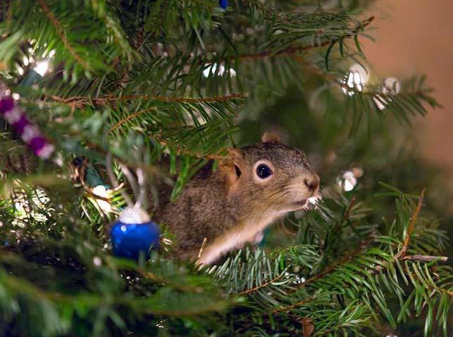 Megmentett mókus