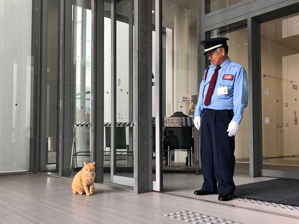 Évek óta próbál bejutni két macska egy múzeumba