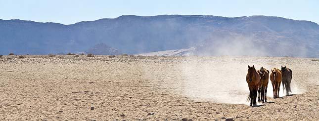 Namíbiai vadlovak