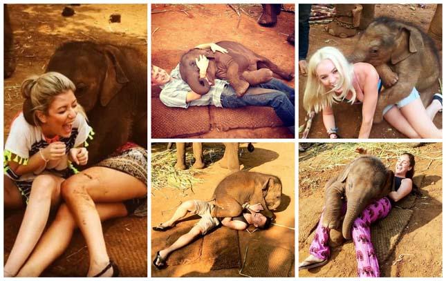 Imádja ölelgetni a turistákat a kiselefánt