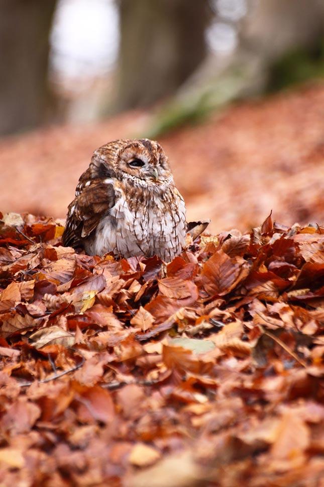 Őszi állatos fotók