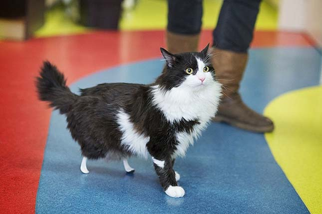 Bionikus művégtagokat kapott egy macska
