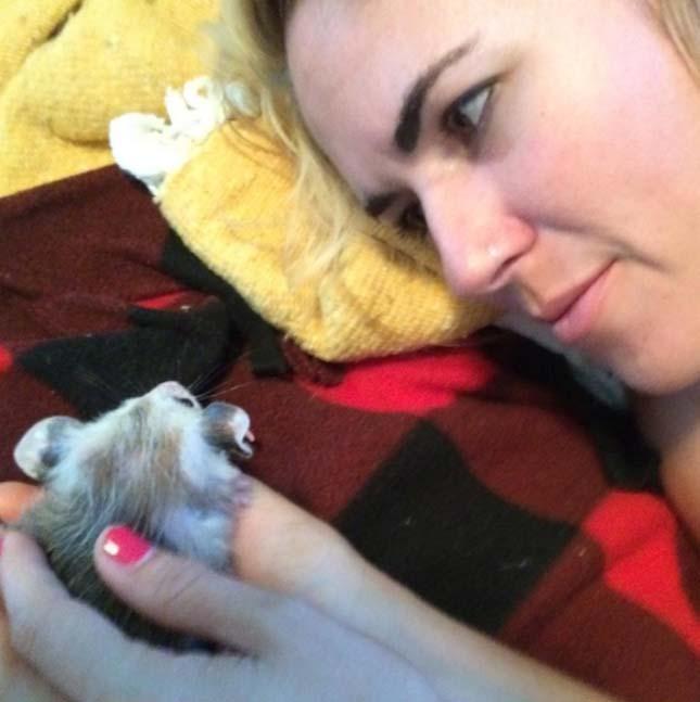 Poppy oposszum