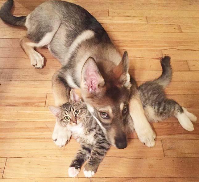 RKutya macska barátság