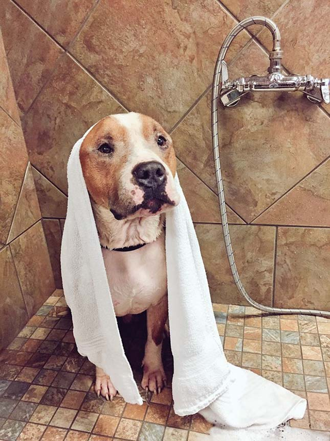Állandóan ölelgeti új gazdiját a megmentett kutya
