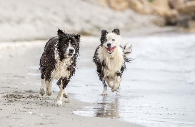Hét év után került elő a család kutyája