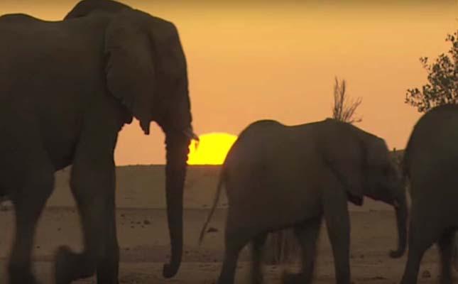 Sivatagi elefántok
