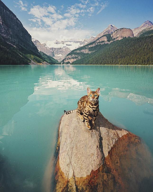 Suki, az utazó macska