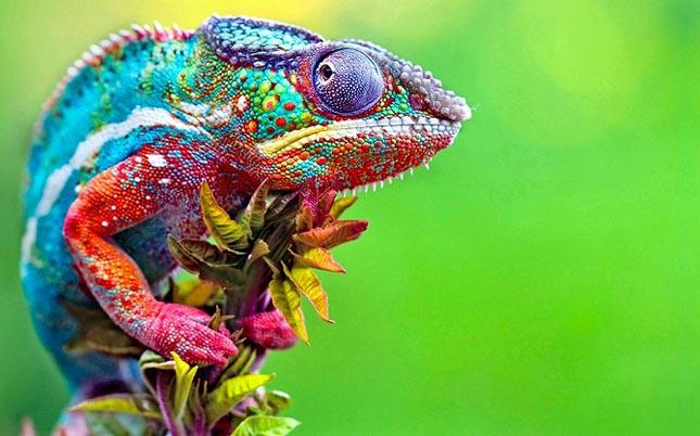 A legszínesebb állatok