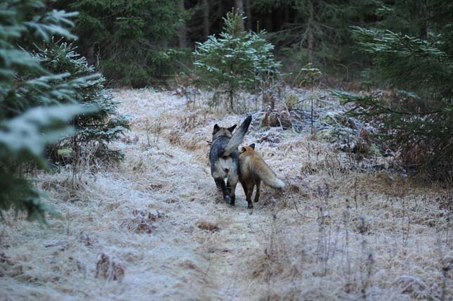 A kutya és a róka barátsága