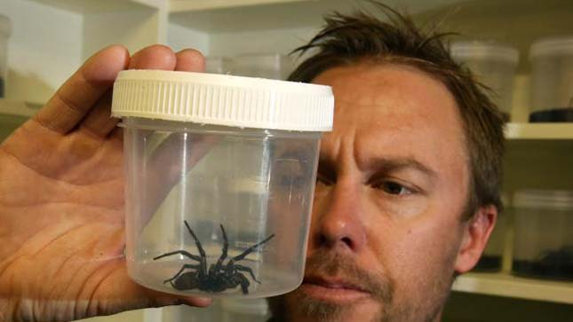 Legmérgesebb pók