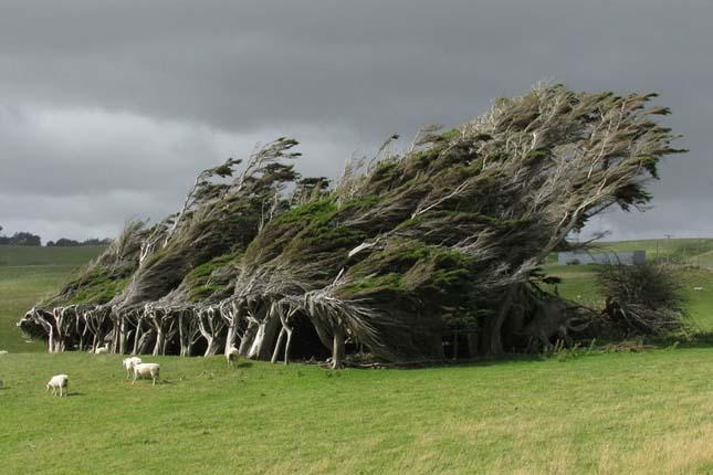 Túlélő fák
