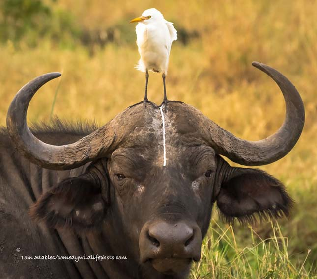Comedy Wildlife Photography Award