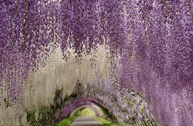 Virágos növények rejtélye