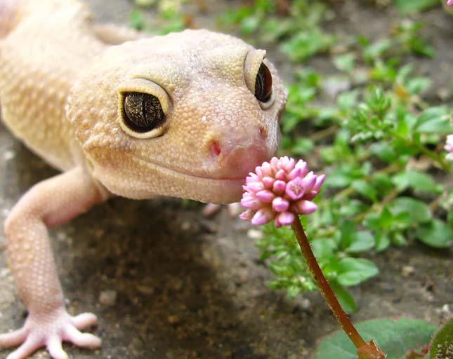 Virágokat szimatoló állatok